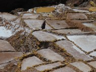 Local woman working the salt pans