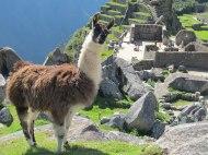 Trip to Mach Picchu 2013-04-25 068