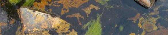 Mount Mulanje 2013-09-009