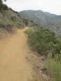 Mount Wilson Trail 2014-05-23 006 (768x1024)