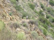 Mount Wilson Trail 2014-05-23 010 (1024x768)