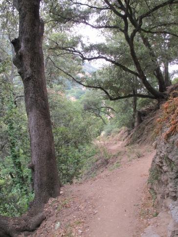 Mount Wilson Trail 2014-05-23 015 (768x1024)