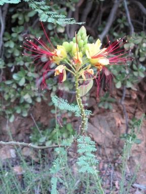 Mount Wilson Trail 2014-05-26 002 (768x1024)