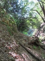 Mount Wilson Trail 2014-05-26 008 (768x1024)