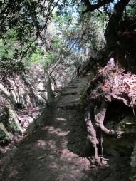 Mount Wilson Trail 2014-05-26 010 (768x1024)
