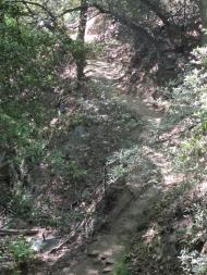 Mount Wilson Trail 2014-05-26 012 (768x1024)