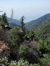 Mount Wilson Trail 2014-05-26 017 (768x1024)