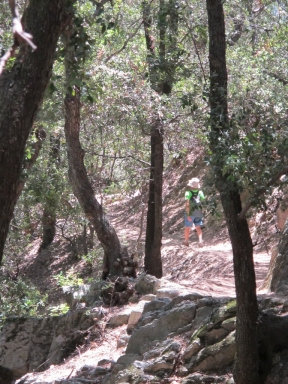 Mount Wilson Trail 2014-05-26 023 (768x1024)